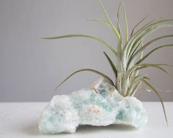 Air Plant on Crystal, Raw Fluorite With Airplant, Sea Green Aqua Air Planter, Beachy Mermaid Decor, Seaside Cottage, Boho Beach House decor