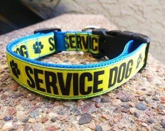 Yellow and Blue Service Dog Collar