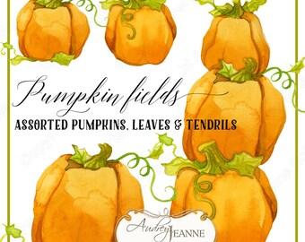 Watercolor Fall Pumpkins, Digital Clip Art, Autumn Leaves Clipart, watercolour pumpkins, leaf, tendril, tendrils, stacked pumpkins E17-04A