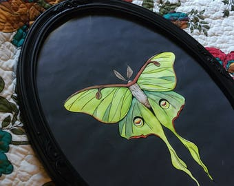 LUNA MOTH framed art