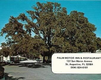 Vintage Postcard The Old Senator Tree Palm Motor Inn & Rest St Augustine St Johns Co Fl #2B
