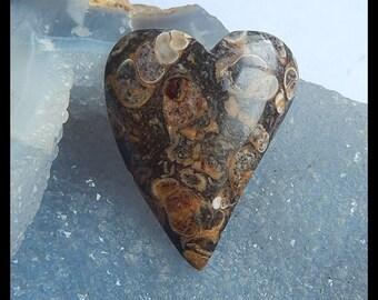 Ammonite Fossil Gemstone Heart Cabochon,44x36x8mm,16.15g