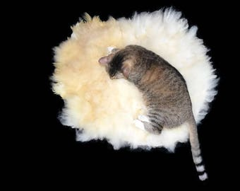 Cruelty Free, Texel, Cat Bed, Pet Bed, Dog Mat, Wool Fleece, Natural Bed, Humane Sheepskin, Hand Felted, ReadyToShip, Cat Lover Gift