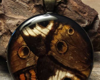 PhbeaD- Large Round Pendant with REAL BUTTERFLY WINGS: entomology jewelry, real insect jewelry, real wing jewelry, real butterfly wings