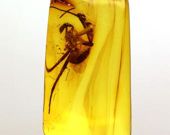 Amber Fossil, Baltic Amber Insect, Amber Inclusion, fossil FLY, Amber stone, Ancient insects, bugs in amber, unique gift, collectible, #1195