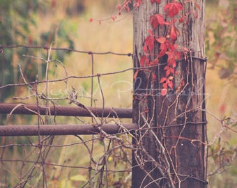 Fence, Summer, Warm, Fall, Rustic, Country, Farmhouse, Home Decor, Original Fine Art Photograph, Print