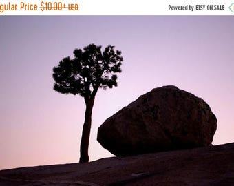 On Sale Trees, Rocks, Silhouettes, Yosemite National Park, CA