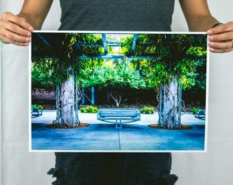Summer Shade - Large Photography Print