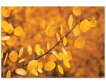 Nature Photography 'Yellow Leaves' by Meirav Levy - Autumn Leaves Art Contemporary Trees Decor on Metal or Plexiglass