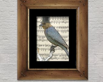 Music Print: Songbird - Brown-headed Cowbird in Top Hat, Bird Art Print