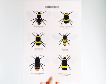British Bees Print - Watercolour Bee Print - Bee Illustration - British Nature Print - Insect Print - British Wildlife - Bumblebee Print