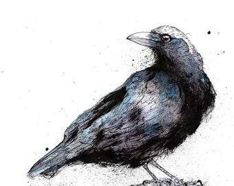 Watercolour and ink crow art print , crow art, drawing of crows, crow gifts, birthday gift, Giclee art print of crow illustration