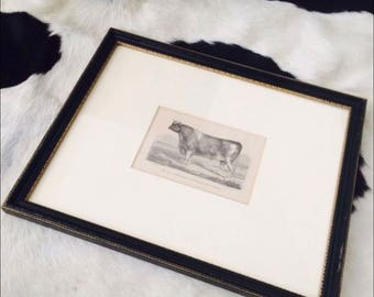 Framed Abraham Cow Print by Charles Diderman