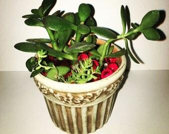 Mini Elegant succulent planter, classic decorative plant jade gift