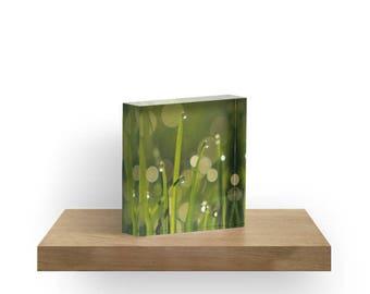 Green Acrylic Block, Grass Shelf Sitter, Mantle Art, Green Small Art, Acrylic Photo Block, Fine Art Nature Shelf Sitter, Dew Drop Home Decor