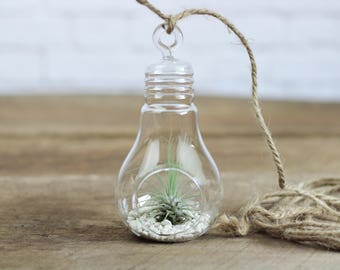 FREE SHIPPING - Set of 3 Light Bulb Hanging Terrarium with Air Plants