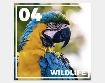 22 Wildlife Lightroom Presets