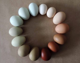 Hand Blow Free Range Chicken Eggs | Discount - Green, Blue, Brown, Chocolate, White & Cream | Natural Rustic Farmhouse, Cottage Chic Décor
