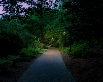 Lighting the Way Instant Photo Download, Insta-Photo, Landscape Photography, Green, Trees, Peaceful, Lamps, Twilight, Dusk, Path, Walkway