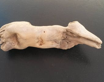 Driftwood picked up on a beach in South of the France