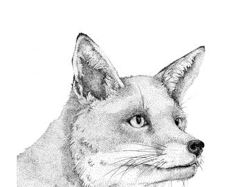Fox - Original Drawing / Illustration
