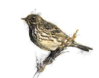 Song thrush | Limited edition fine art print from original drawing. Free shipping.