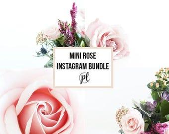 Mini Rose Stock Instagram Photos, Stock Photography, Rose Stock Photography, Instagram Branding Photos, Photos for Instagram