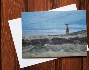 Red Deer in Scotland Greetings card C5
