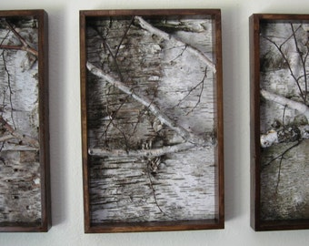 White birch Triptych