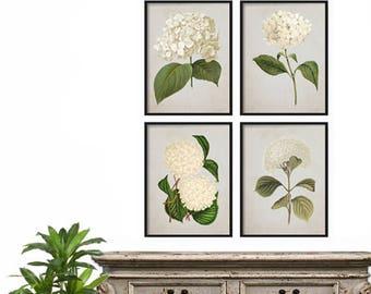 Farmhouse Decor - Vintage Hydrangea Print Set - Print Set - Botanical Print Set - Illustration - Wall Art Print - Hydrangea Illustration