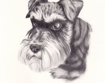 Black and white Pet Portrait, hand drawn pet portrait, pencil drawing, custom portrait, custom pet portrait, animal drawing, custom drawing