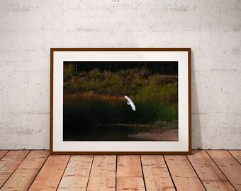 White Crane over Pond