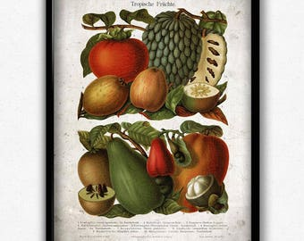 Tropical Fruit Vintage Print - Fruit Poster - Fruit Art - Home Decor - Home Art - Kitchen Art - Kitchen Decor - Botanical Print