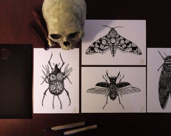 Insects - A5 Prints set