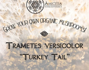Organic Turkey Tail Sawdust Spawn (Trametes versicolor) LIVE MYCELIUM - 50g *PDF Book Included