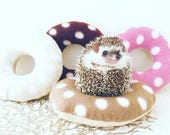Donuts Cushion/toy/hedgehog/hedgehog bed/guineapig toy/ferret toy/small animal/pet toy/pillow