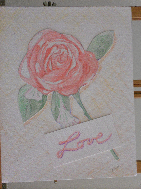 Ilustraciones de rosa lpiz de color rosa dibujo lpiz de