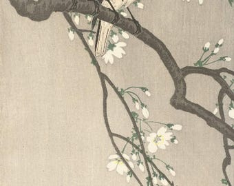 "Japanese Art Print ""Chickadees on Cherry Branch"" by Ohara Koson, woodblock print reproduction, fine art, asian art, cultural art, blossoms"