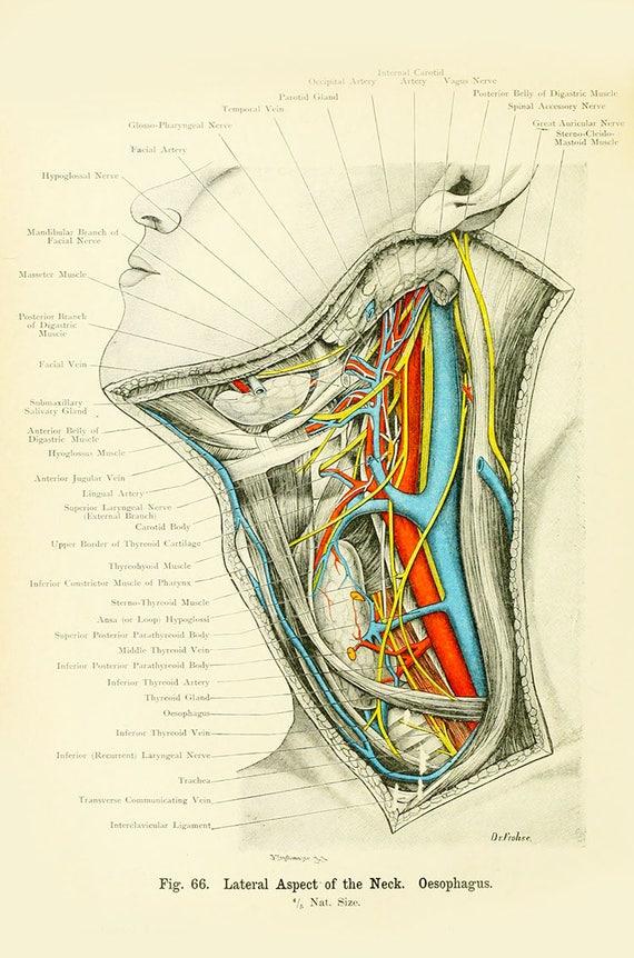 Nett Axial Ct Hals Anatomie Galerie - Anatomie Ideen - finotti.info