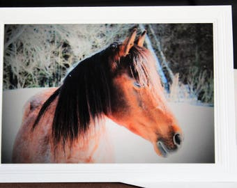 PHOTO GREETING CARD, Horse nature photography, blank card, photo note card, birthday card, special occasion note card, for her as for him