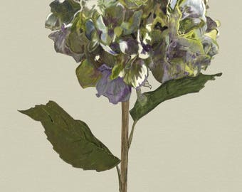 Hydrangea Illustration from The Botanical Series, by Naomi Turner