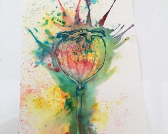 Original ink drawing of a poppy seed head