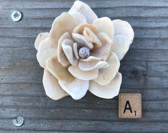 Small size-California Shell Flowers/ Home Decor / House Warming Gift / Beach House Decor / Natural Shells