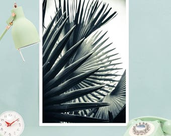 "Leaves Palms Print - ""Palm Shade 2"" at JUNIQE - Artist: Christoph Abatzis"