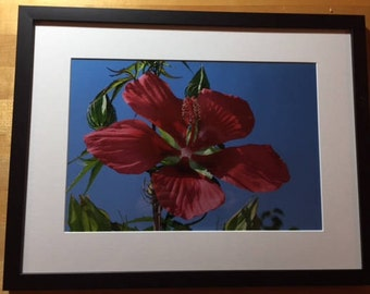 Red Flowers -2007