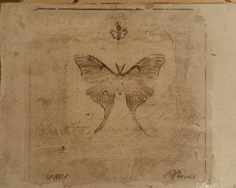 Butterfly wooden box