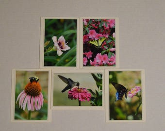 Pretty & Pink - 5 Fine Art Handmade Photo Cards, Fine Art Greeting Card Set, Hummingbird and Butterfly Stationary Set, Pink Photo Stationary