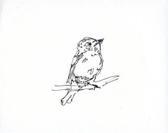 Sketchbook Sale - Bird #12 Original Ink Line Drawing - 8x10 Songbird Original Art