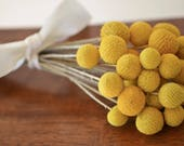 Billy balls, Bunch of dried billy balls,  Craspedia, Bunch of craspedia, dried flowers, Billy Buttons, Yellow Dried decor, wedding decor