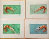Reserved Shrimp Kit for Scarlett!